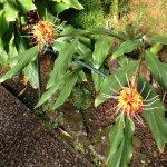 royal botanic garden 004