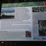 royal botanic garden 005