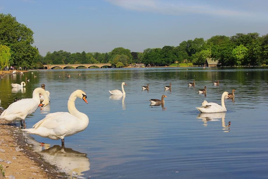 hyde park serpentine lake